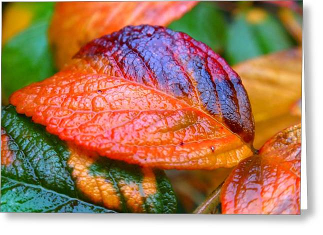 Rainy Day Leaves Greeting Card by Rona Black