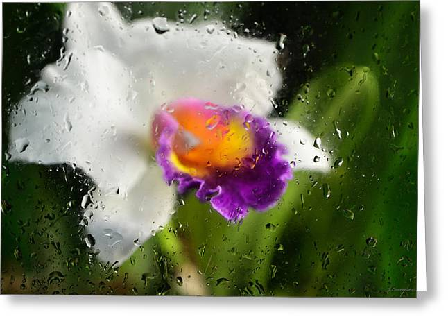 Boutique Design Greeting Cards - Rainy Day Orchid - Botanical Art By Sharon Cummings Greeting Card by Sharon Cummings
