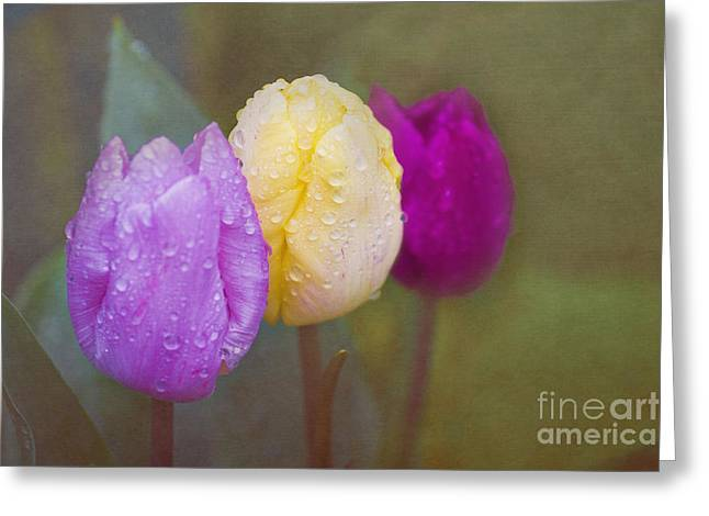 Terri Waters Greeting Cards - Rainy Day Tulips Greeting Card by Terri  Waters