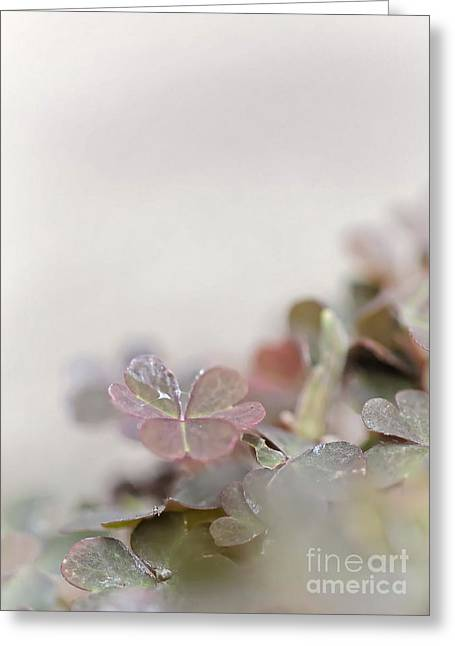 Subtle Colors Greeting Cards - Rainy morning Greeting Card by   FLJohnson Photography