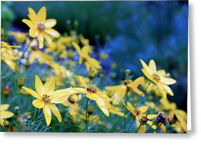 Give Me Flowers Greeting Cards - Rainy Morning Sunshine Greeting Card by Hanne Lore Koehler