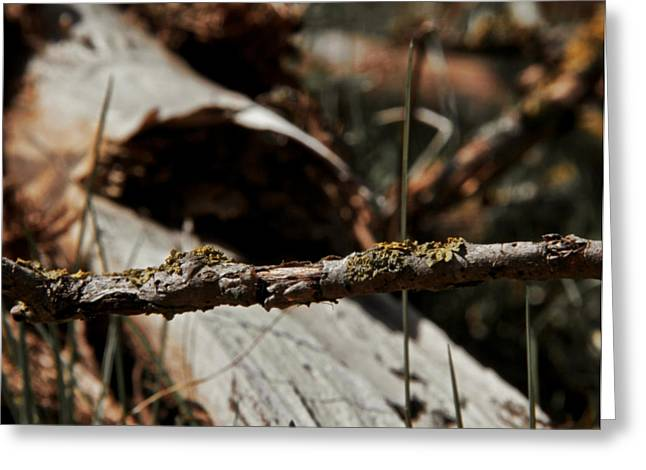 Ground Level Photographs Greeting Cards - Raise The Bar Greeting Card by Odd Jeppesen