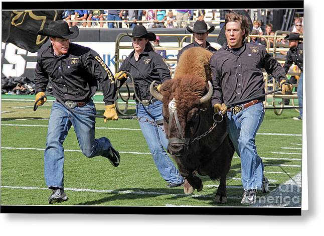 University Of Boulder Colorado Greeting Cards - Ralphie V Greeting Card by Bob Hislop