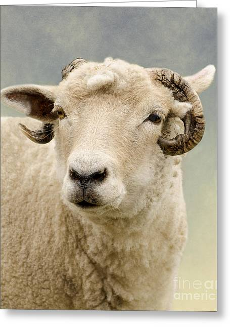 Zoology Greeting Cards - Ram Greeting Card by Linsey Williams