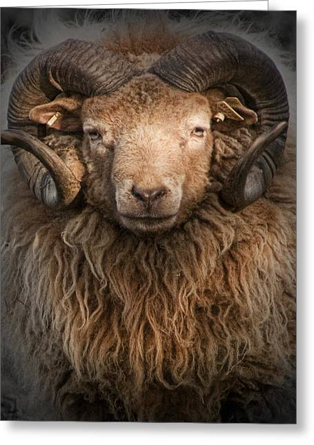 Randy Greeting Cards - Ram Portrait Greeting Card by Randall Nyhof