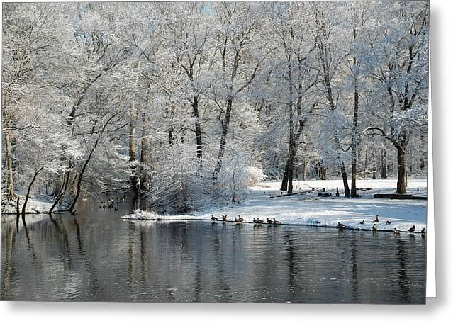 Trees Reflecting In Creek Greeting Cards - Rancocas Creek Greeting Card by Elaine Walsh
