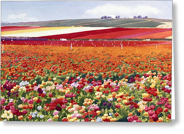 Ranunculus Greeting Cards - Ranunculi in Carlsbad Greeting Card by Mary Helmreich