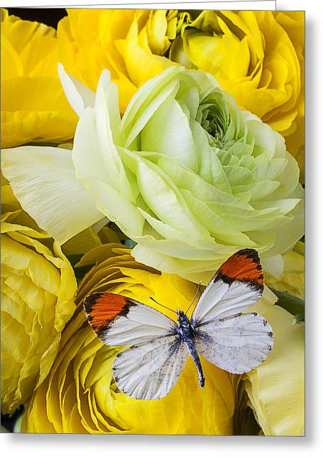 Ranunculus Greeting Cards - Ranunculus and butterfly Greeting Card by Garry Gay