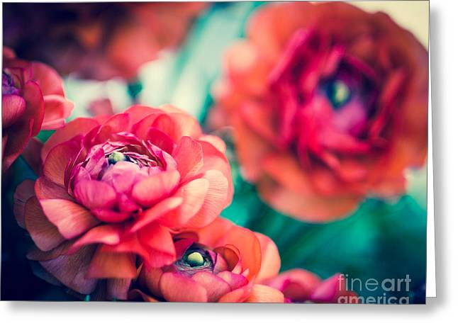Sonja Quintero Greeting Cards - Ranunculus Greeting Card by Sonja Quintero