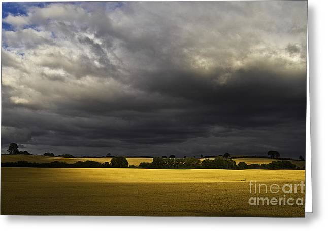 Heiko Koehrer-wagner Greeting Cards - Rapefield Under Dark Sky Greeting Card by Heiko Koehrer-Wagner