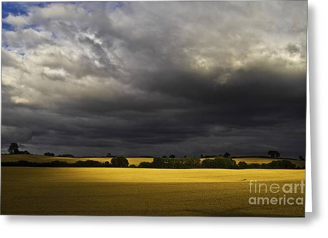Rapefield Under Dark Sky Greeting Card by Heiko Koehrer-Wagner
