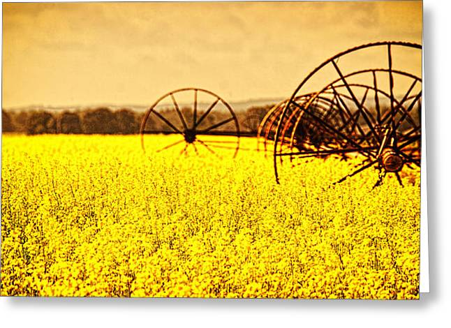 Rapeseed Farm In Bloom Greeting Card by Vicki Jauron