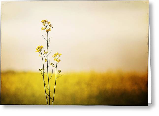 North Fork Greeting Cards - Rapeseed in Bloom Greeting Card by Vicki Jauron