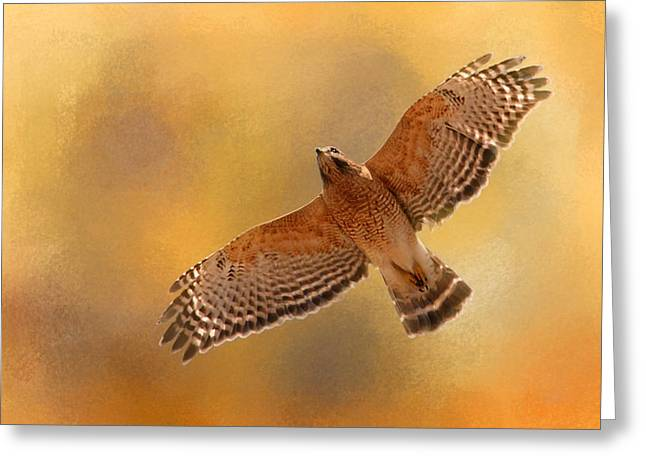 Red Shouldered Hawk Greeting Cards - Raptors Afternoon Flight Greeting Card by Jai Johnson