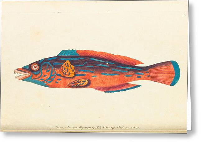 Rare Fish Greeting Cards - Rare and Unusual Fish 1790 Greeting Card by Philip Ralley