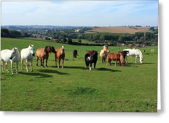 Horse Breed Greeting Cards - Rare Breeds Greeting Card by Aidan Moran