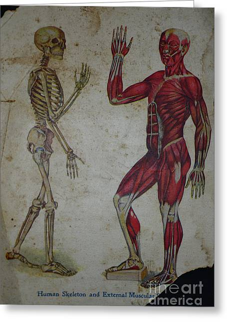 External Skeleton Greeting Cards - Rare Medical Illustration 1 of 4 Greeting Card by Paul Ward