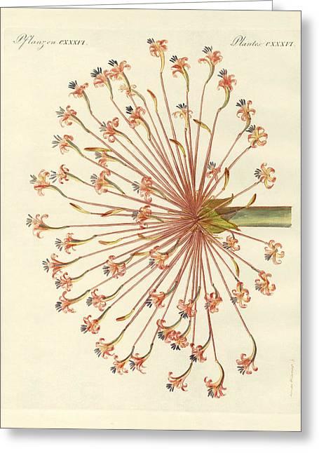 S Lily Greeting Cards - Rare ornamental plants Greeting Card by Splendid Art Prints