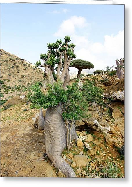 """strange Trees"" Greeting Cards - Rare Plant 4 Greeting Card by Muneer Binwaber"