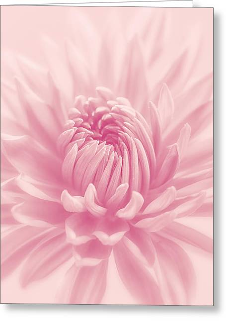 Kim Photographs Greeting Cards - Raspberry Smoothie Greeting Card by Kim Hojnacki