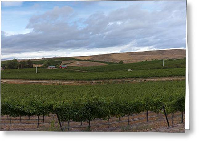 Vineyard Photographs Greeting Cards - Rattlesnake Ridge Agriculture Greeting Card by Mike  Dawson