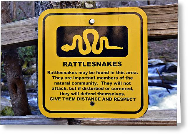 Rattlesnakes Greeting Card by Susan Leggett