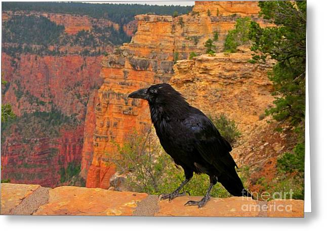 Landscape Posters Greeting Cards - Raven at the Grand Canyon Greeting Card by John Malone