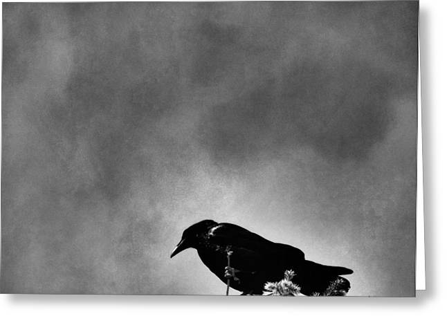 Night Angel Greeting Cards - Raven Greeting Card by Dan Sproul