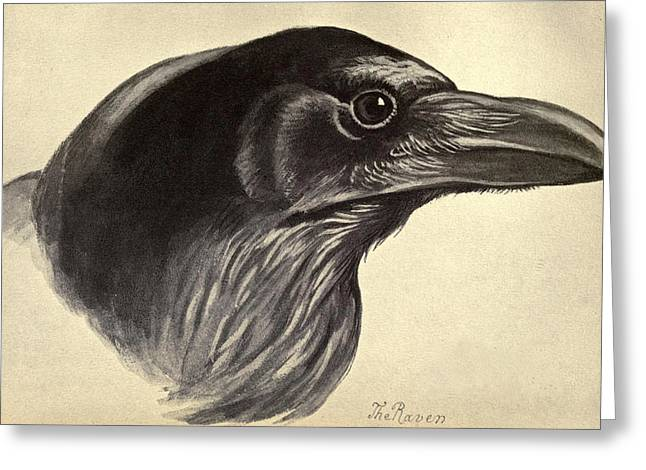 Raven Drawings Greeting Cards - Raven Greeting Card by David Douglas