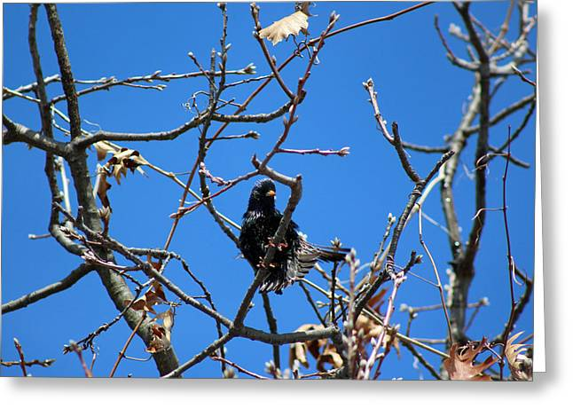 Single-celled Greeting Cards - Raven Feather Fluff Greeting Card by Lorna Rogers Photography