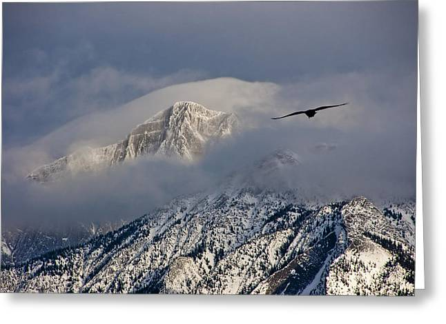 Canadian Winter Art Greeting Cards - Raven flying in the Jasper National Park Mountains Greeting Card by Randall Nyhof
