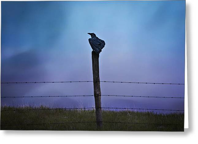 Corvus Corax Greeting Cards - Raven In The Rain Greeting Card by Theresa Tahara