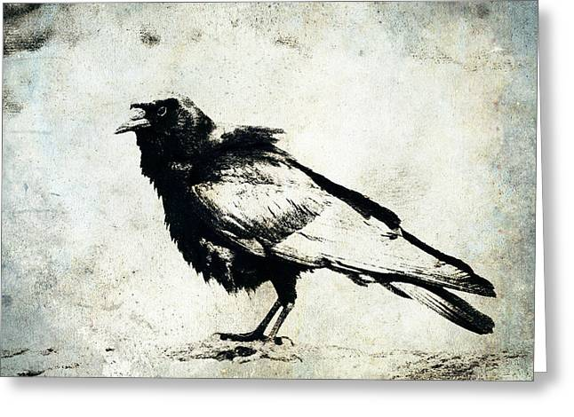 Corvid Greeting Cards - Raven on Blue Greeting Card by Carol Leigh