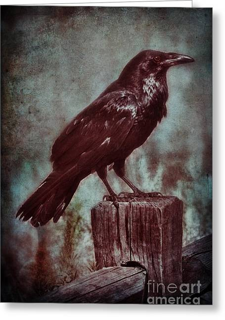 Old Fence Post Greeting Cards - Raven Perched on a Post Greeting Card by Jill Battaglia