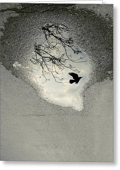 Winter Crows Greeting Cards - Raven reflection Greeting Card by Wojciech Zwolinski