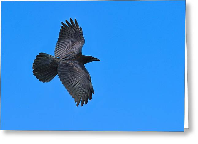 Corax Greeting Cards - Raven Greeting Card by Tony Beck