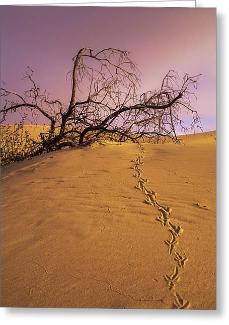 Raven Tracks Across The Sand Dune Greeting Card by Robert L. Potts