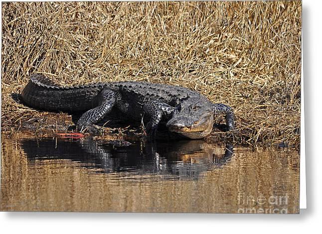 Al Powell Photography Usa Greeting Cards - Ravenous Reptile Greeting Card by Al Powell Photography USA