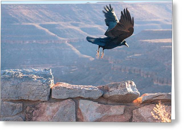 Goosenecks State Park Greeting Cards - Ravens fly Greeting Card by Southwindow Eugenia Rey-Guerra