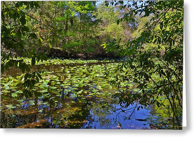 Florida Landscape Greeting Cards - Ravine Gardens - A Different Look at Florida Greeting Card by Christine Till