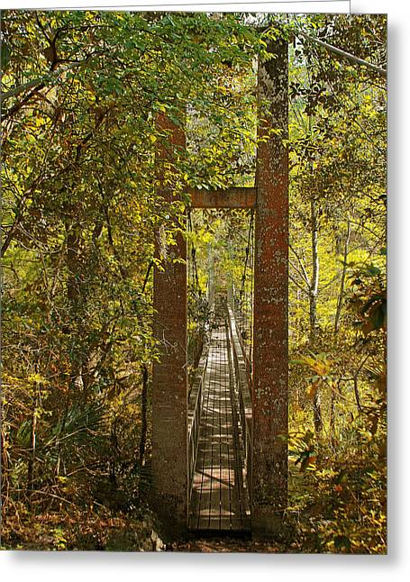 Narrow Greeting Cards - Ravine Gardens State Park in Palatka FL Greeting Card by Christine Till