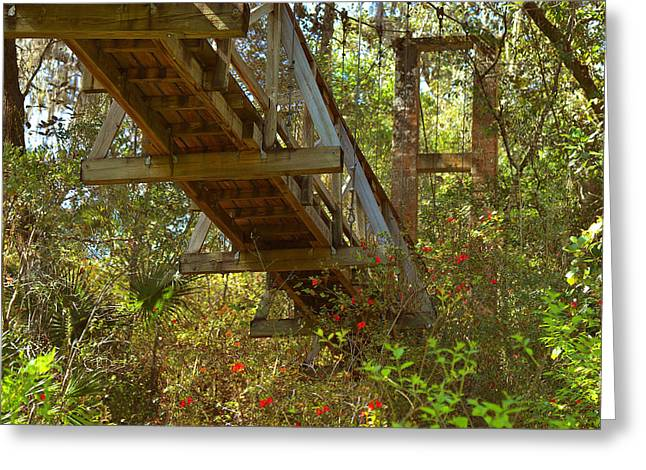 Narrow Greeting Cards - Ravine State Gardens Palatka Florida Greeting Card by Christine Till