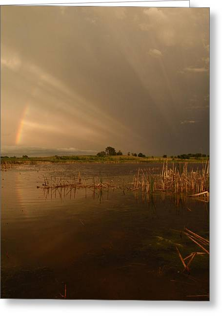 Peterson Nature Photography Greeting Cards - Ray-n-bow vertical Greeting Card by James Peterson