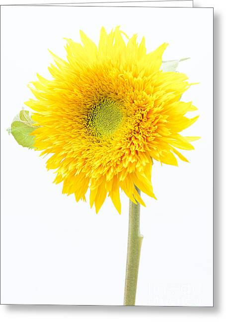 Ray Of Sunshine Greeting Card by Anne Gilbert