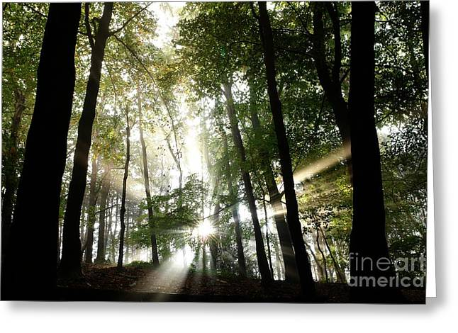 Europe Greeting Cards - Rays Greeting Card by Brothers Beerens