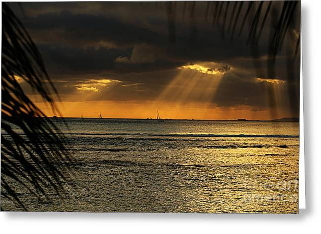 Get Greeting Cards - Rays Greeting Card by Cheryl Young