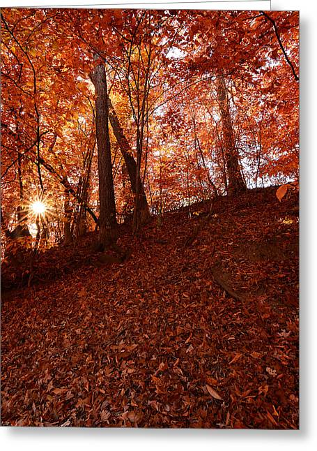 Autumn Art Greeting Cards - Rays Of Leaves Greeting Card by Lourry Legarde