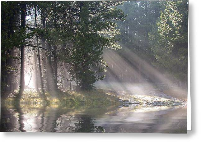 Rosevelt National Forest Greeting Cards - Rays of Light Greeting Card by Shane Bechler