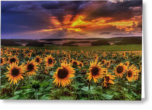 Sunshine Pyrography Greeting Cards - Rays of Sunflowers Greeting Card by Steffen Gierok