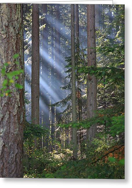 Provincial Park Bc Greeting Cards - Rays Greeting Card by Randy Hall